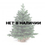 Ель Royal Christmas Spitsbergen Table 977075 (75 см)