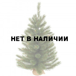 Сосна Триумф Сказочная 73537 (60см)