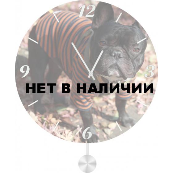 Настенные часы SvS 5511865
